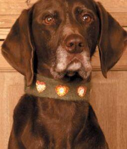 Christmas Dog Collar 260x310