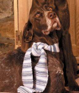 Striped Dog Scarf 260x310