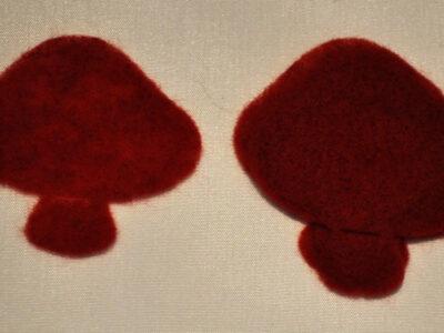 red_stor_svamp_tyrkisk_rød