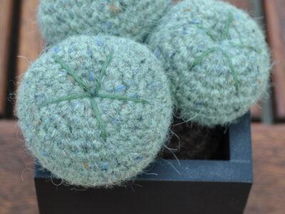 Kaktus Lophophora