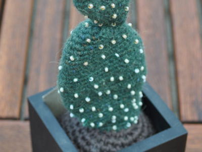 Kaktus Opuntia Microdasys var. Albispina