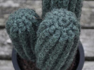 Kaktus Pilosocerueus Glaucescens