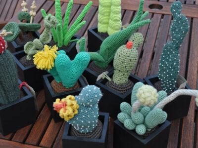 Kaktusser og sukkulenter